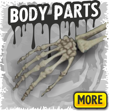 Skeletons Body Parts & Bones for Halloween