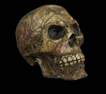 corpseskull.jpeg