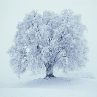 snow-tree.jpg