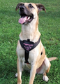 Smart Pet Love 4in1 Safe & Sound Harness