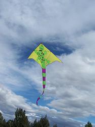 Gecko Kite
