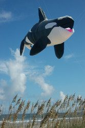 Killer Whale - Inflatable