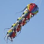 Rainbow Myriapod