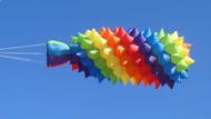 Rainbow Sea Pineapple