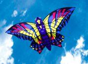 Swallowtail (NT)