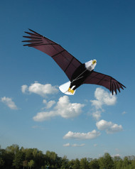Giant Bald Eagle