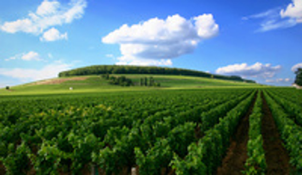 Languedoc-Roussillon, Powerhouse of French Wine