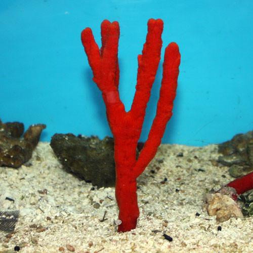 Red Tree Sponge medium