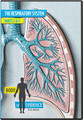 The human respiratory system—of which the lungs are the largest component—is the most high-tech air purification and conditioning system on earth. Although we don't normally think about how smoothly and effectively our lungs work unless they start to malfunction, practically every human is launched into life with two of them!  Finely tuned yet sturdy enough for 90 years or longer on this earth, our lungs are ventilated with voluntary muscles about 20 times every minute and yet we breathe all day without even thinking about it.  Man has never designed a workable substitute for blood. Blood plasma carries nutrients; red blood cells bind life-sustaining oxygen to hemoglobin; white blood cells combat infections and diseases; small cell fragments called platelets patch up holes in our blood vessels and keep us from bleeding to death.  Part 1: 38 mins.   Part 2: 33 mins. |  Audience:  Teens & Adults