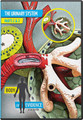 "The once-terrifying thought of the loss of kidney function is now seen by many as just another medical inconvenience. But is that accurate? Most of us know someone who has been helped by high-tech machines that attempt to do the job of the kidneys. Yet with all of man's skills, machines and medications are insufficient substitutes for God's original design.  The kidneys rid the body of the waste products of protein metabolism in the form of urea and maintain a balance of salts, water, and other substances. The kidneys' unusual approach for ridding the bloodstream of unwanted substances is to essentially throw nearly everything out and then absorb back what the body needs. The three basic functions of the kidneys—filtration, excretion, and absorption—are carried out by nearly 2 million ""filtering"" units called nephrons.  In this video, Dr. Menton uses human anatomical models, microscope imaging, and detailed computer illustrations to describe the importance and incredible design of the human kidney.  Part 1: 26 mins.   Part 2: 38 mins. 