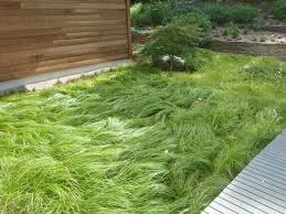 Image result for carex pennsylvania