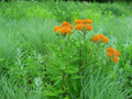 Dry Soil | Short Prairie Seed Mix