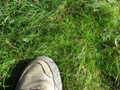 Low Growing, No Mow Lawn Grass -  Minimal maintenance - all soil and sun types