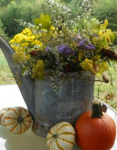 Fall Blooming Wildflower Plant Kit