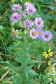 CRP NATIVE SEED MIX | Minnesota CP25 Mesic Mix
