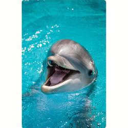 Personalised Luggage Tag - Dolphin