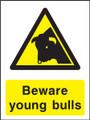 Beware young bulls