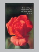 Memorial Cards: Red Rose