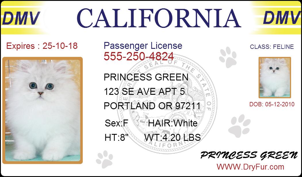 pet-drivers-license2.png