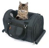 Kitten in Airline Pet Carrier