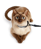 Cat Collar Leash for Airline Travel