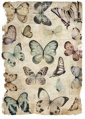 Insect Collection I