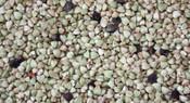 750 G Buckwheat - Whole