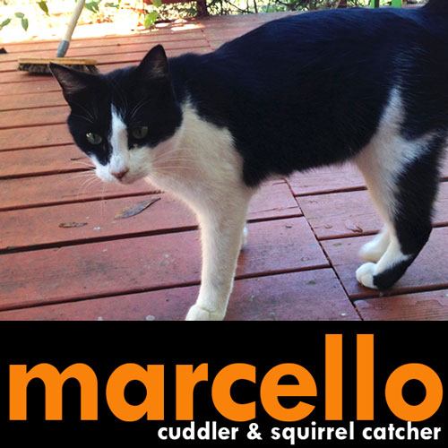 Marcello
