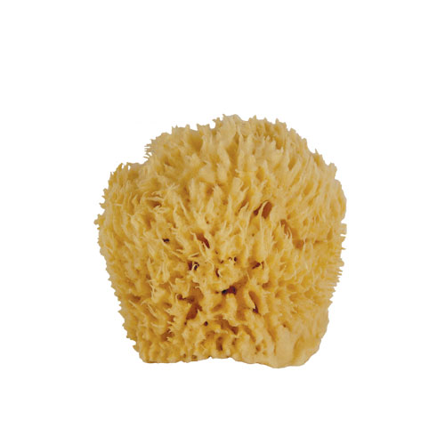 Ultra Soft & Manly Large Sea Wool Bath Sponge - Jade and Pearl