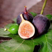 Asian Fig CG