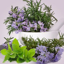 Rosemary Mint CG