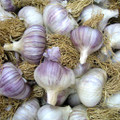 Asian Tempest Garlic- Bulk Seed