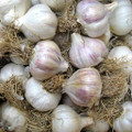Romanian Red Garlic - Bulk