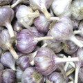 Purple Glazer Garlic - Bulk Seed