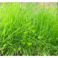 Erosion Control Mix Grass