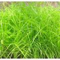 Hold Tight Grassland Mix