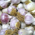 Chesnok Red Garlic - Bulk