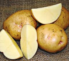 Organic Potato - Yukon Gold