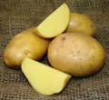 Organic Potato - German Butterball