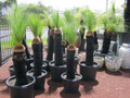 Grass Tree - Starting from $119