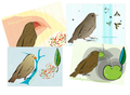 Darwin&#039;s Finches print set