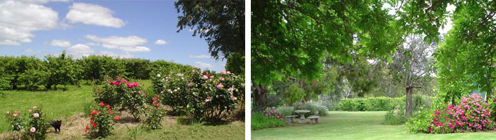 Have a Picnic in Our Beautiful Gardens