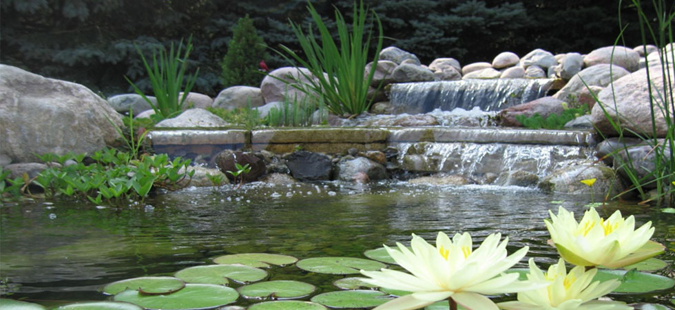 Image gallery koi fish pond supplies for Koi pool water gardens thornton