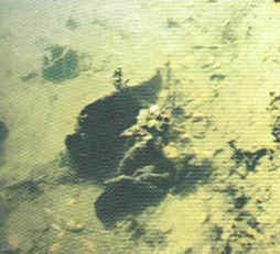 algae-diatoms.jpg