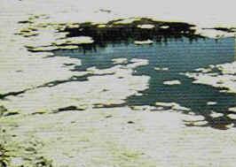 filamentous-algae.jpg