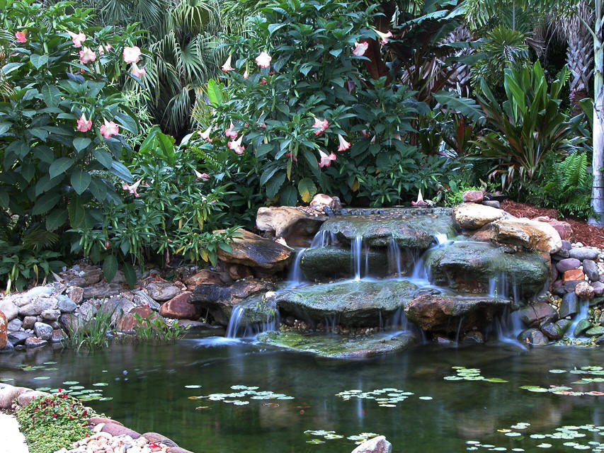 Image gallery koi fish pond suppliers for Koi pool water gardens thornton