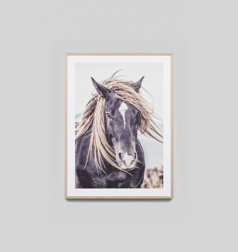 Mustang Sally in light timber frame