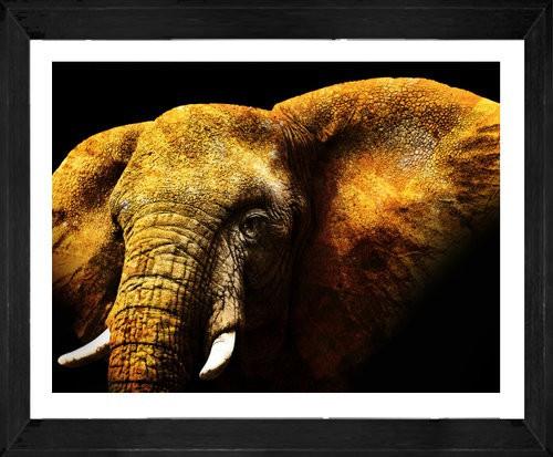 On Trend Image | Mikumi Elephant | Print Decor, Melbourne