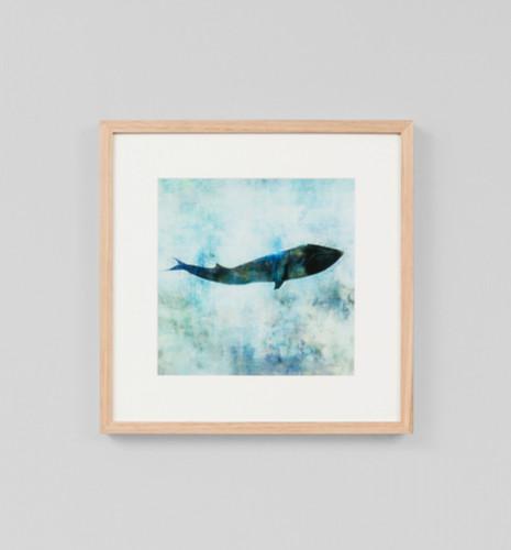 Ocean Whale 1
