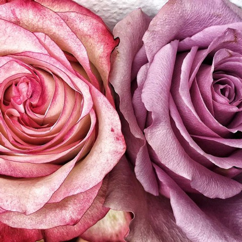 Flower image | Karen Tonna | Print Decor